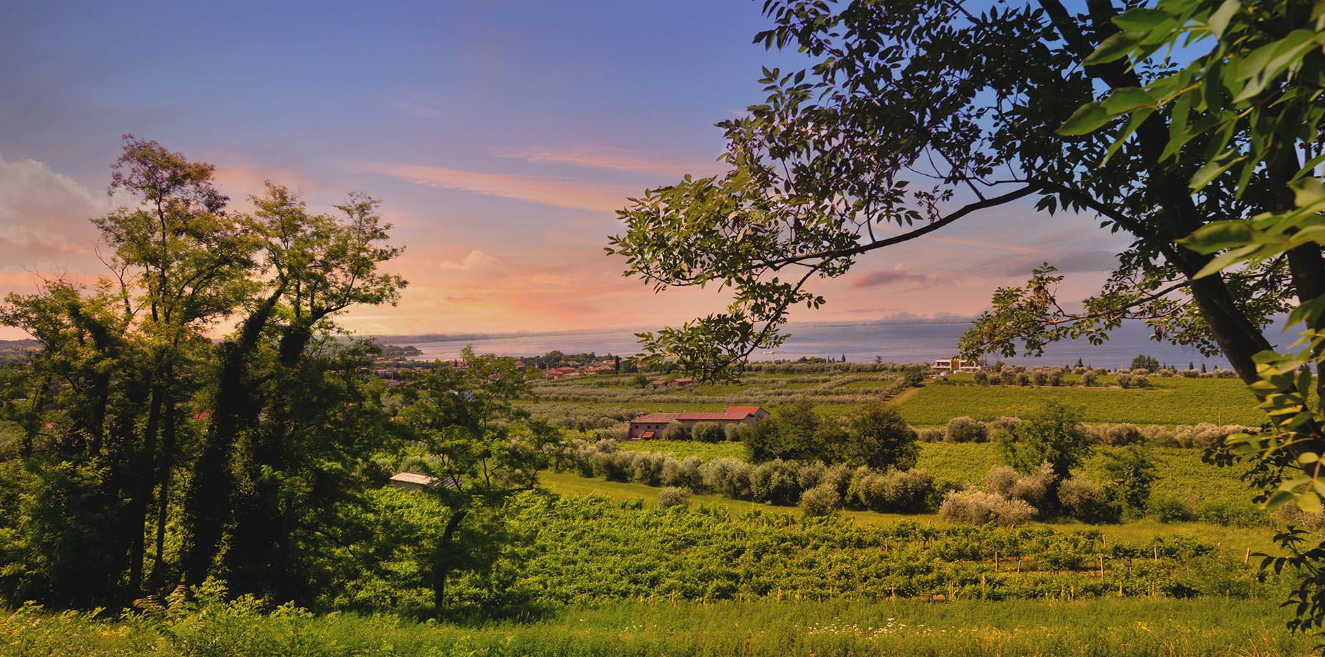 Produzione spumanti Rosè, spumanti Brut, vini rosati, metodo classico. Azienda agricola situata sulle colline di Bardolino, Lago di Garda.