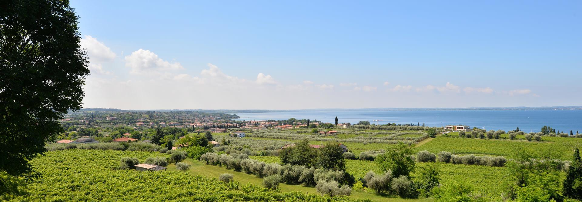 Vini e spumanti tipici del Lago di Garda, freschi e fruttati che nascono da vitigni autoctoni.