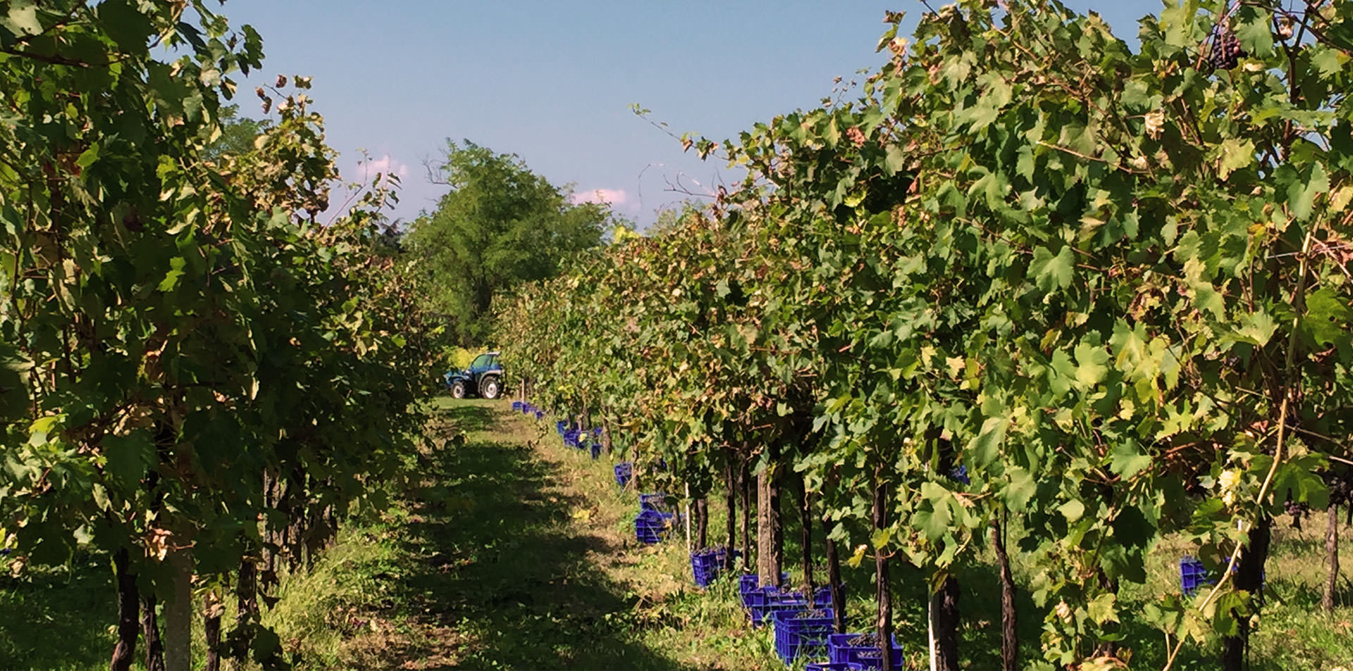 Produciamo vini e spumanti nel rispetto dell'ambiente e con tanta passione